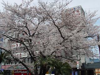 20060406-1.jpg