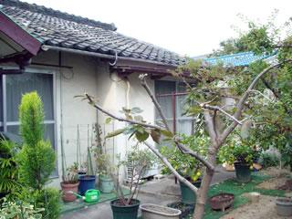 20061106-1.jpg